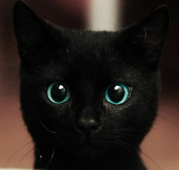 baby eye color, black kitten with unusual, green-blue turquoise eyes, looking surprised