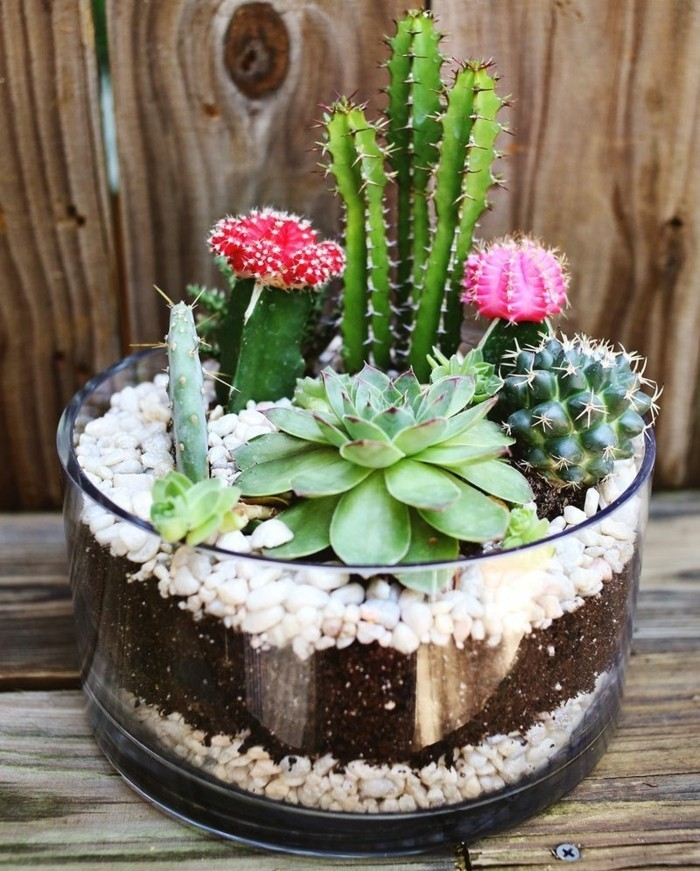 best friend birthday gifts, round glass dish, containing earth and white pebbles, with several different kinds of cacti and succulents planted inside
