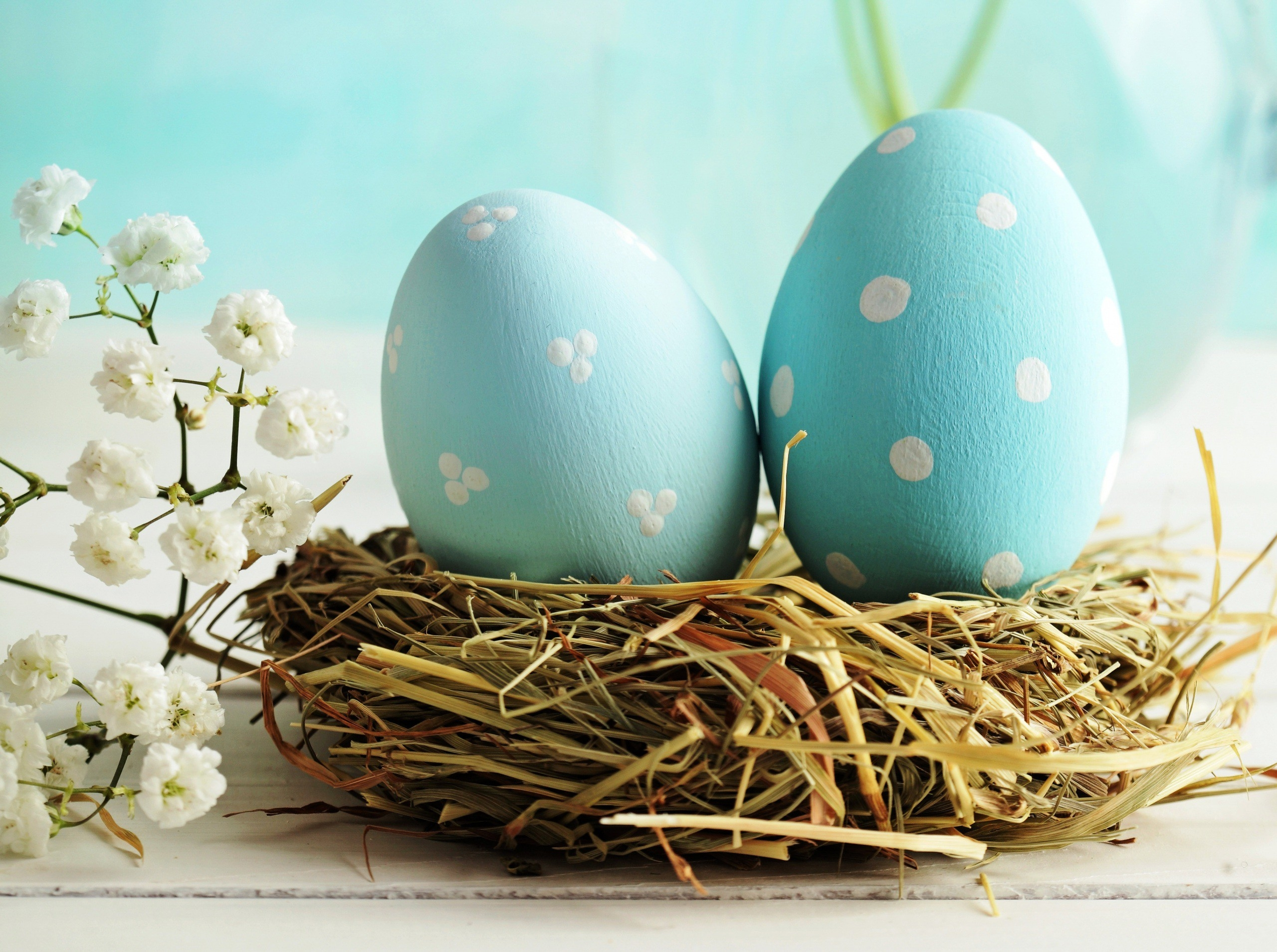 nest made of straw, containing two eggs, painted in turquoise, and decorated with white spots, blossoming tree branch nearby, how to dye easter eggs