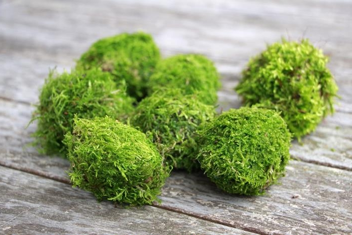 seven eggs, completely covered by bright green moss, coloring easter eggs, placed on a wooden surface