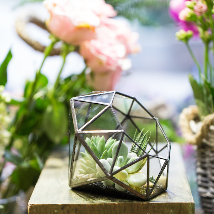 diamond-shaped glass terrarium, with black details, containing three different succulents, in various shades of green