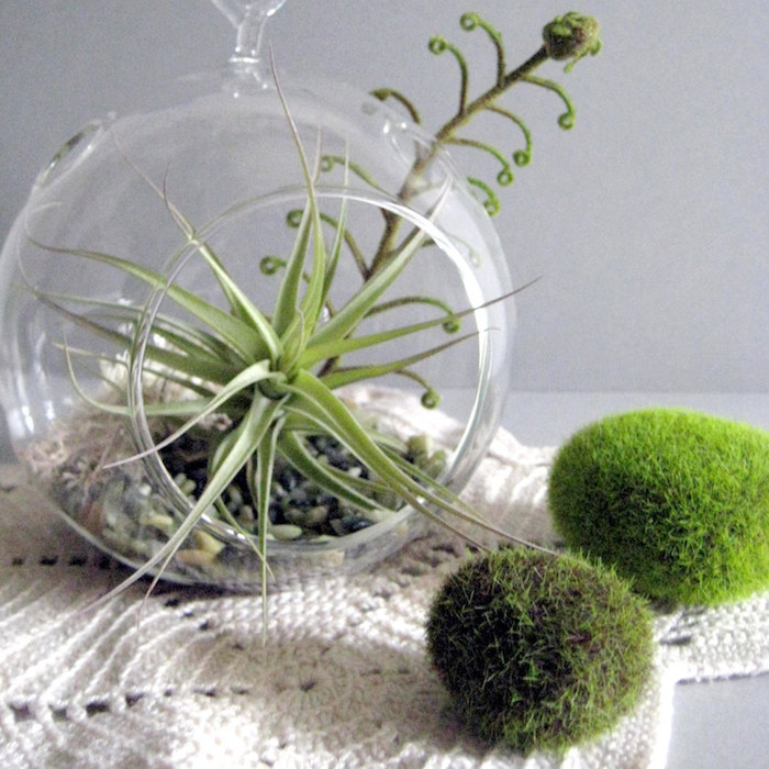 moss-covered oval stones, near tillandsia glass terrarium, on cream-colored, crocheted table cloth