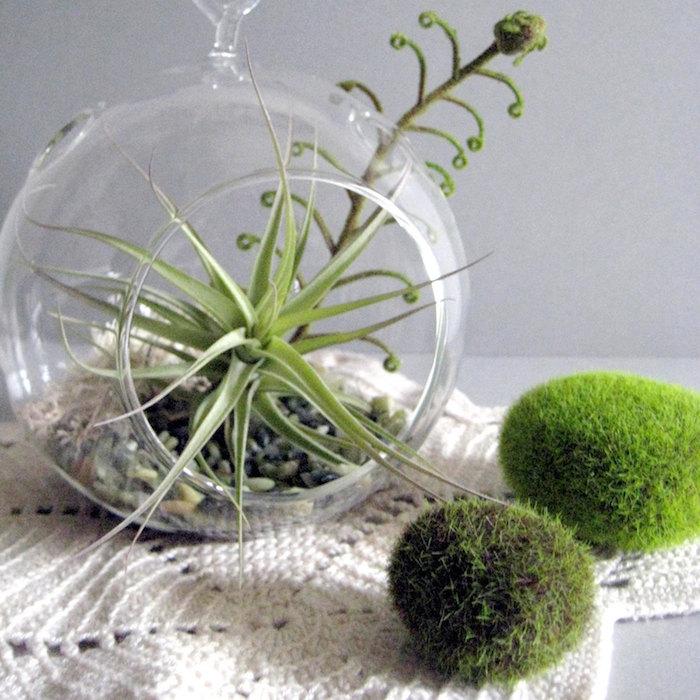 moss-covered oval stones, near tillandsia glass terrarium, on cream-colored, crocheted table cloth