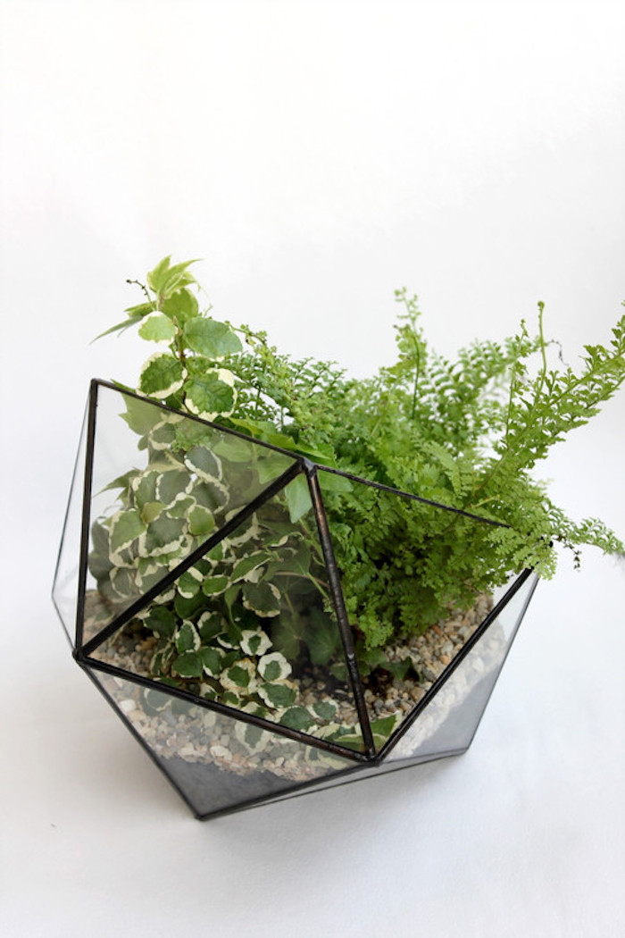 air ferns and other air plants, in green and white, inside a gem-shaped planter, with pebbles and black details