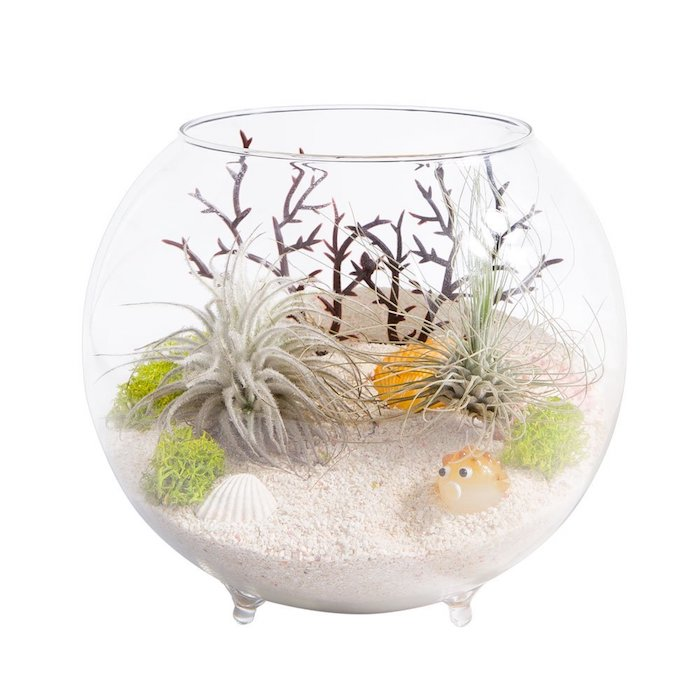 tiny tillandsia xerographica, in round glass bowl, with small legs, filled with fine sand, seashells and a fish decoration, light green seaweed