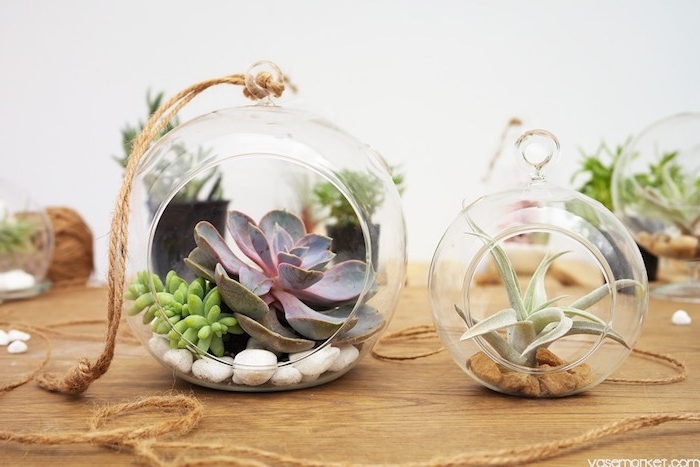 succulents and tillandsia xerographica, inside a large and smaller, round glass terrarium, with white and brown pebbles