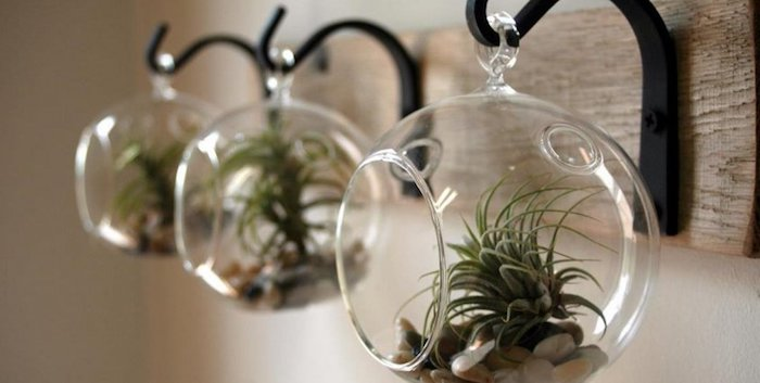 black metal hangers, on a wooden board, each decorated with a round, hanging terrarium made of glass, with pebbles and air plants