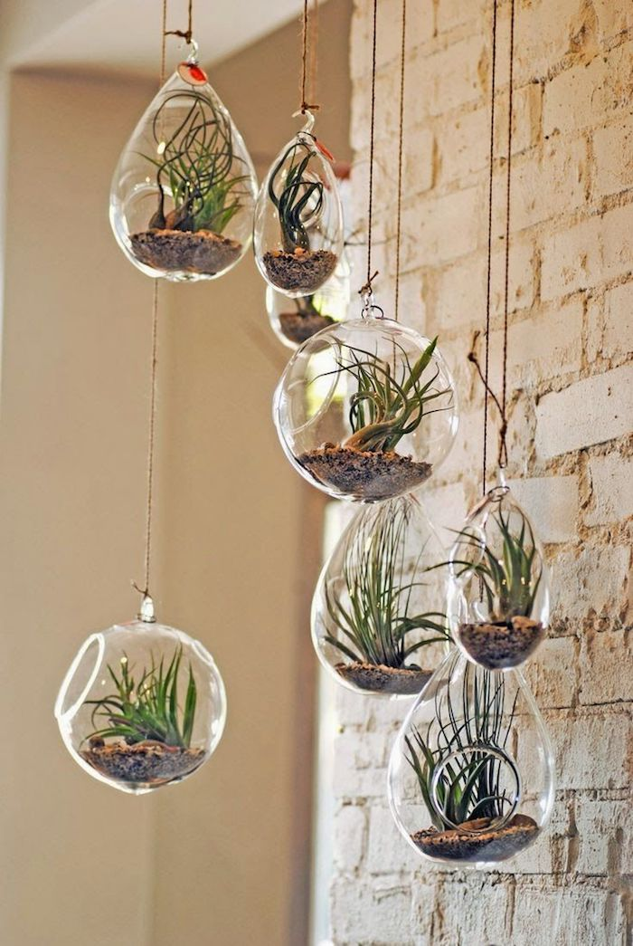 1001 Ideas For Making A Beautiful And Lush Air Plant Terrarium