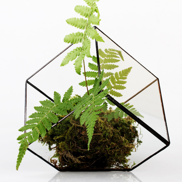 dark brownish green moss, and a green air fern, placed inside a gem-shaped, edgy glass terrarium, with black details