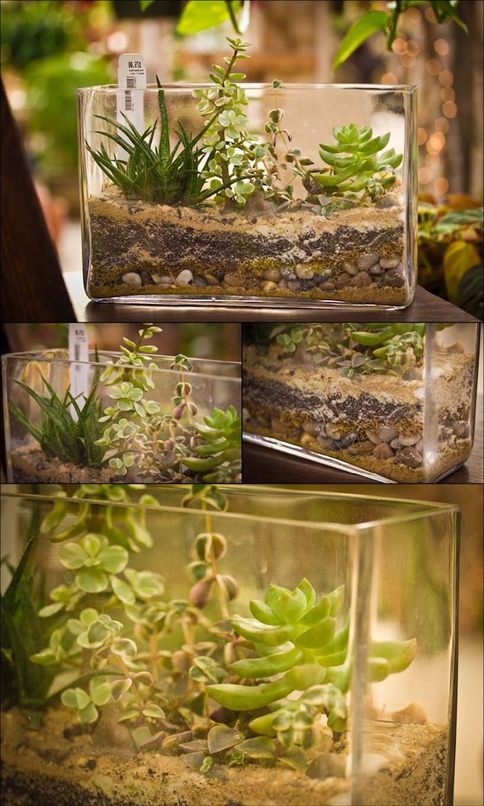 collage with four images, all showing rectangular aquariums, filled with pebbles and dirt, and containing airplants of different varieties