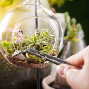 Air Plant Terrariums - Tiny, Exquisite Gardens for Your Home