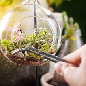 Air Plant Terrariums - Tiny, Exquisite Gardens for Your Home