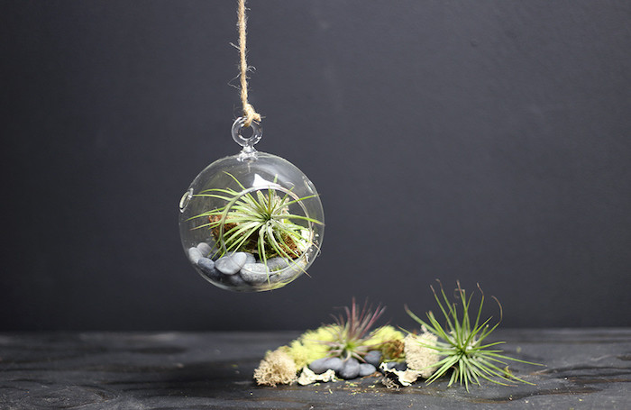 sphere-shaped hanging terrarium, made from clear glass, pale gray stones and air plants, dark gray background