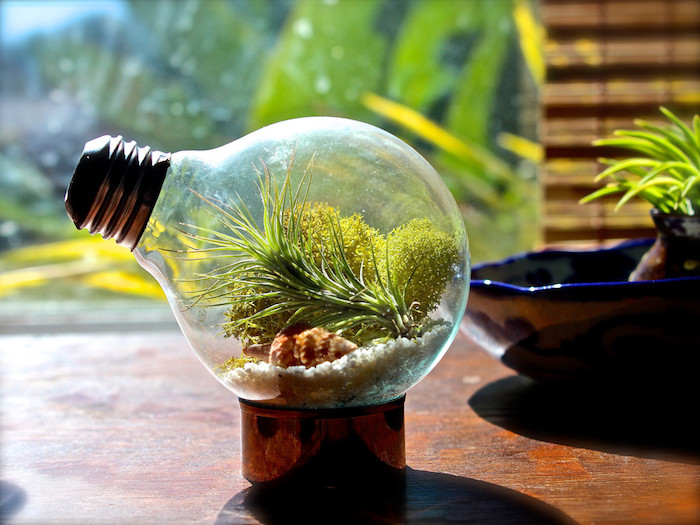 lightbulb turned into an air plant terrarium, placed on a small metal stand, filled with moss, sand and a seashell, a tillandsia plant