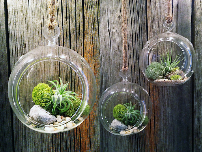 three glass spheres, with round openings, filled with moss, stones and pebbles, hanging terrarium inspiration, green tillandsia plants inside