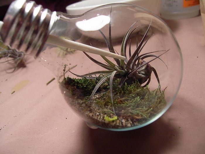 dirt and moss, inside a small lightbulb, containing tiny airplants, micro glass terrarium idea