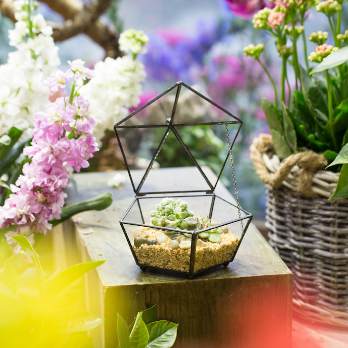 opened diamond-shaped terrarium, made of glass with black details, filled with tiny beige pebbles, stones and succulents
