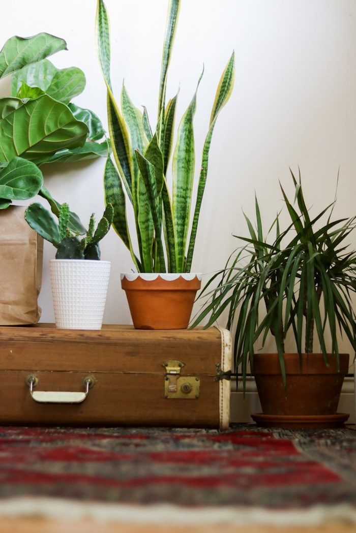 four different indoor plants, inside hand-decorated pots, in brown and beige and white, good mothers day gifts, vintage suitcase and oriental rug