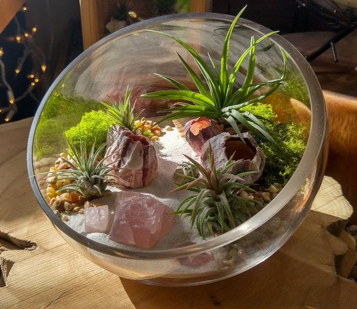 half sphere made of glass, air plant terrarium, with fine white sand, pink stones and orange pebbles, moss and tillandsia plants