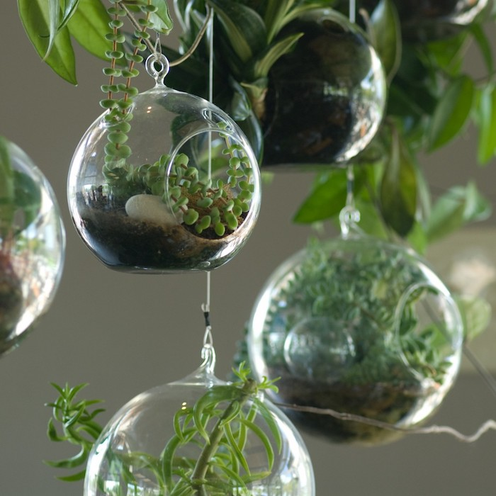 five examples of a hanging terrarium, made out of glass, filled with dirt, with various green air plants, decorative stones