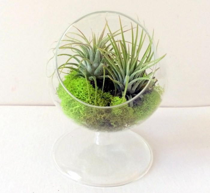see-through terrarium, shaped like a glass, with two tillandsia plants, placed on bright green moss,