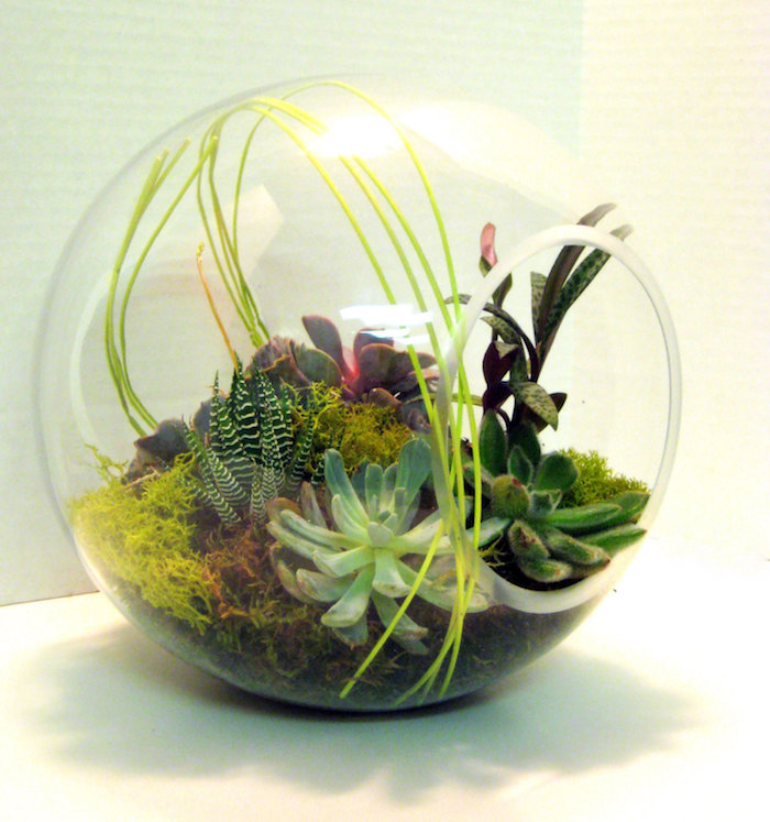 succulents and air plants, inside a spheric glass terrarium, with circular side opening, filled with moss in different colors