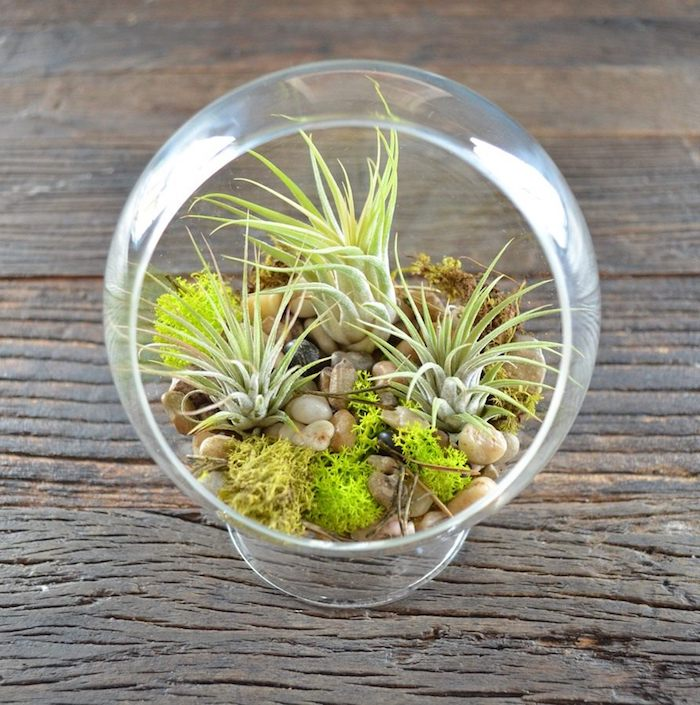 stones in light beige, moss in different shades of green, three air plants, and several tiny sticks, inside a glass sphere with round opening