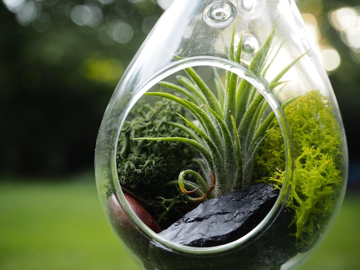 hanging terrarium, tear-shaped glass container, with large dark stones, moss in different shades of green, and a tillandsia air plant