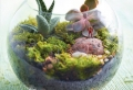 Air Plant Terrariums – Tiny, Exquisite Gardens for Your Home
