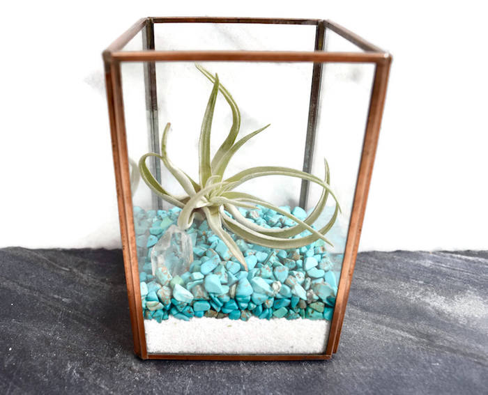 xerographica inside a rectangular glass planter, with wooden details, filled with fine white sand, and turquoise pebbles