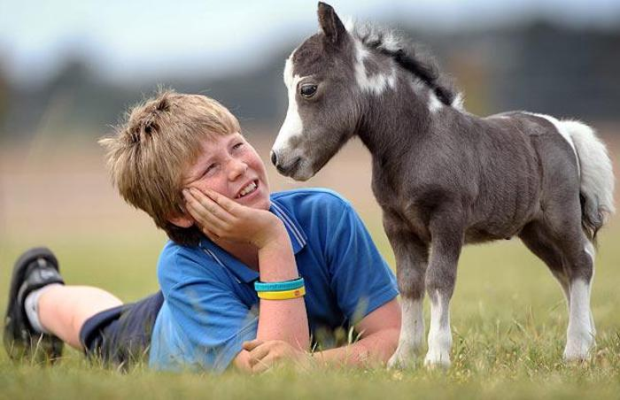 freckled young boy, smiling and looking at a pinto miniature horse foal, while laying on a field with green grass