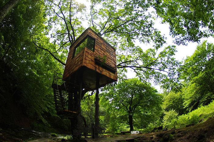 cool tree houses, cube-shaped structure built on a tree, above the ground, accessible through a small staircase, thick green forest