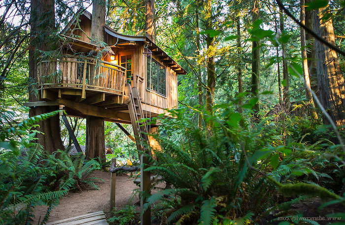 terrace attached to a wooden hut, diy treehouse, built high above the ground, on several trees, green ferns and other plants nearby