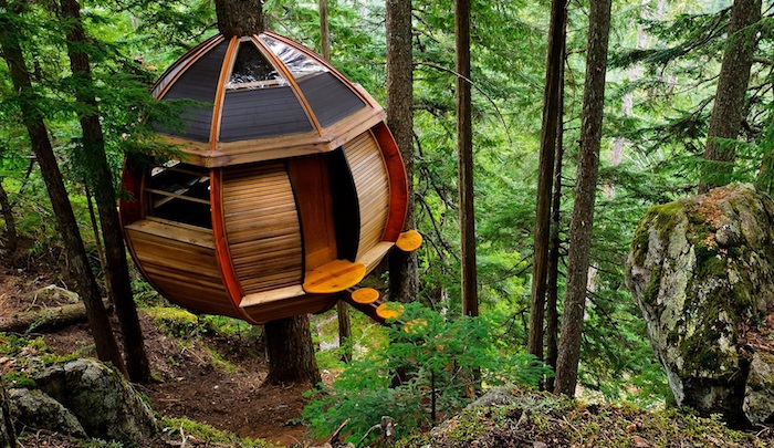 semi-round structure, made from wood and glass, inside a forest, with firs and ferns, cool tree houses, round wooden steps