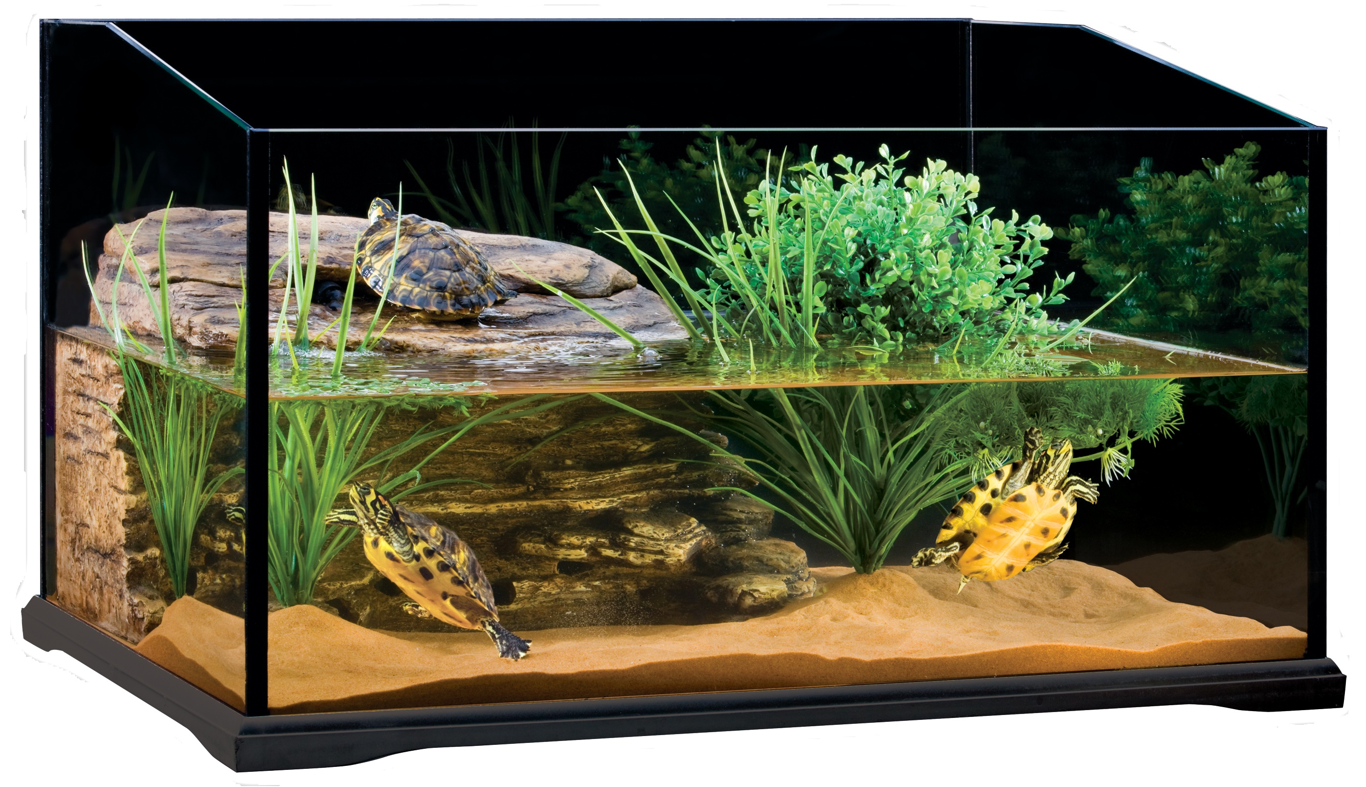 aquarium containing water and three turtles, low maintenance pets, decorated with fine sand, a chunk of wood, and various water plants