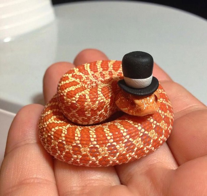 top hat decoration in black and white, placed on the head of a tiny snake, with orange and yellow scales, exotic animals as pets, coiled on the palm of a hand