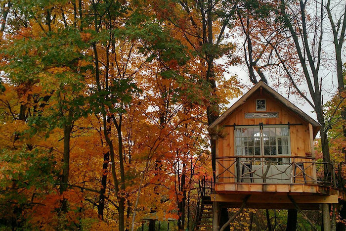 autumn trees with yellow, orange and green leaves, near a wooden backyard treehouse, with a small terrace, accessible through a set of stairs