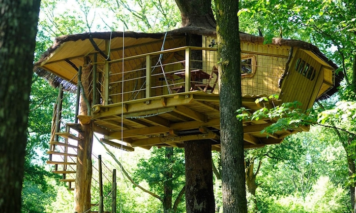 saucer-shaped tree house, made from yellow colored wooden material, and supported by several trees, accessible through stairs