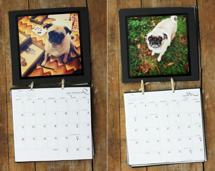 different photos of pugs, decorating a diy wall calendar, homemade gift ideas, placed on a wooden surface