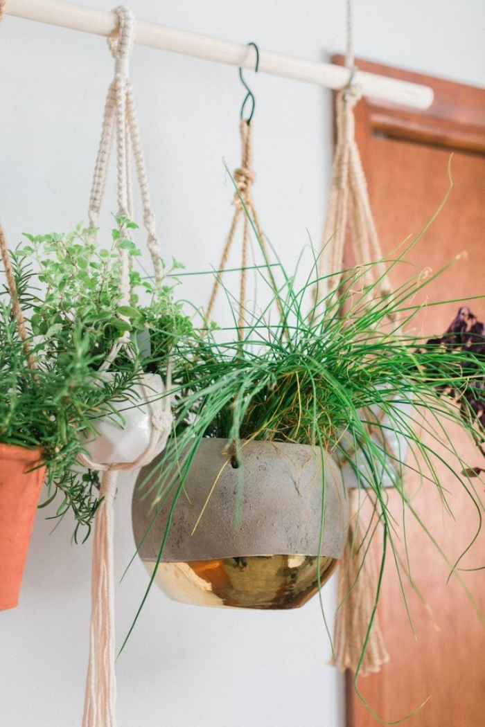 indoor plants of different kinds, growing inside small pots, hanging from a rod, suspended from ropes, attached to the ceiling
