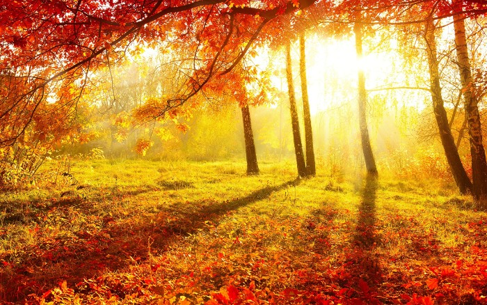 thanksgiving greeting message, afternoon light pouring through several trees, with orange folliage, fall in the woods