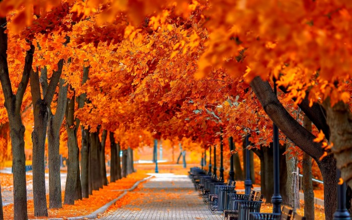 thanksgiving messages for friends, bright orange folliage, on multiple trees, growing on either side of a paved road, with benches and rubbish bins