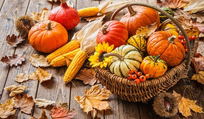 rattan basket containing pumpkins in different colors, a small sunflower and some orange berries, happy thanksgiving wishes, ears of corn and dried fall leaves nearby