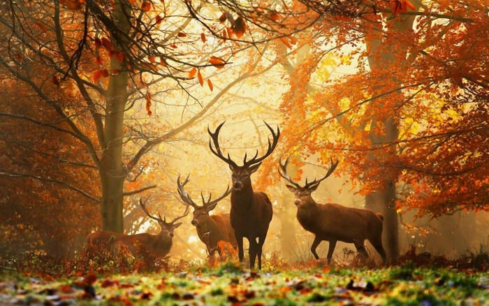 thanksgiving wishes, four deer with long antlers, standing in a forest, surrounded by trees, covered in orange fall leaves, and green grass covered in frost