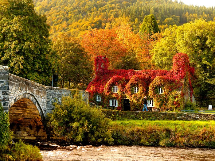 country house covered in pale green, yellow and red climbing plants, near a river with a stone bridge, thanksgiving wishes, trees with leaves in different colors