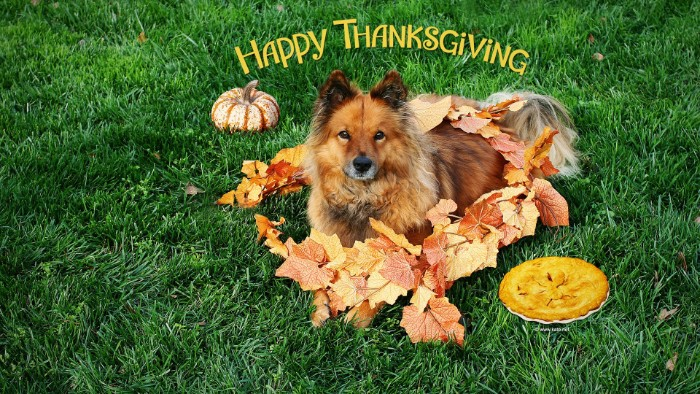 dog laying on a green lawn, surrounded by faux, decorative autumn leaves, thanksgiving messages for friends, a pie and a small pumpkin nearby