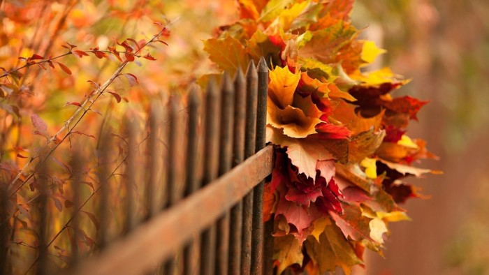 fence made from rusty metal, decorated with a bunch of fall leaves, in red and orange, yellow and beige, thanksgiving message to employees, more plants in fall colors growing nearby