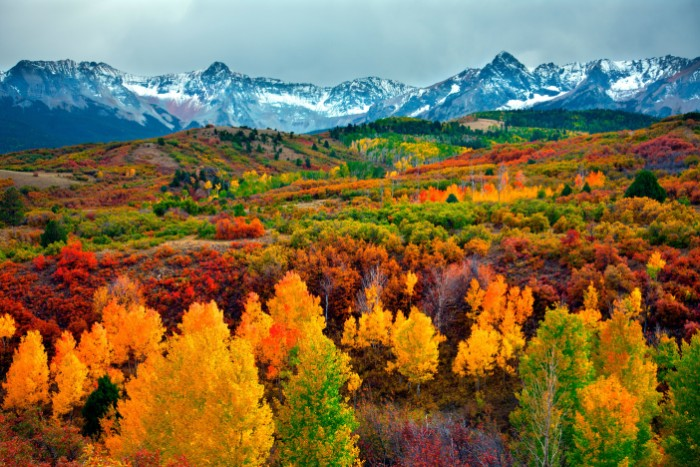 colorful landscape featuring multiple trees, with yellow and orange, green and red, brown and beige folliage, thanksgiving card messages, snowy mountain range in the background