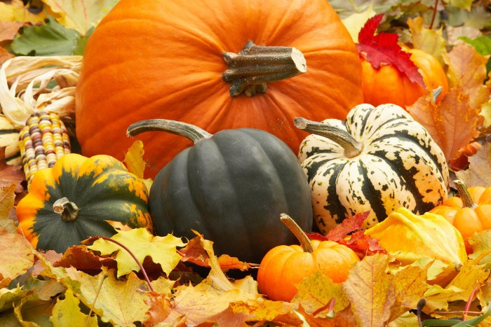 dried fall leaves, in yellow and orange, and light green, under five pumpkins, in different sizes and colors, thanksgiving messages for friends, an ear of multicolored corn nearby