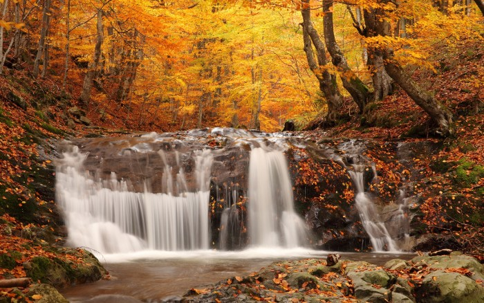thanksgiving greetings, river with a small waterfall, running through a forest, with trees covered in yellow and orange leaves